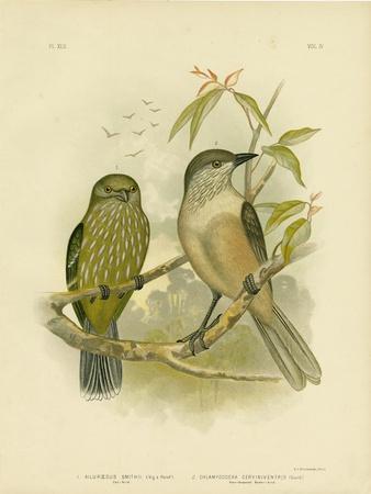 Catbird, 1891