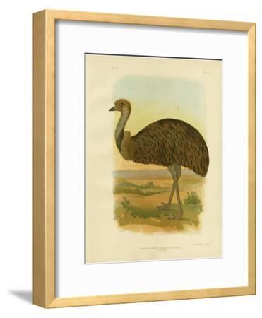 Emu, 1891