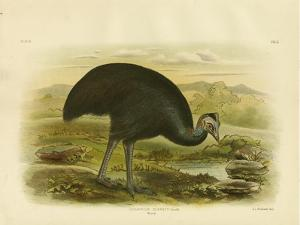 Mooruk, 1891 by Gracius Broinowski