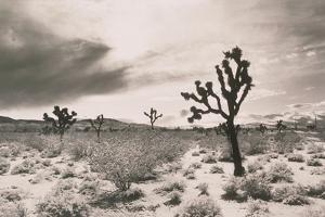 Cacti in Desert by Graeme Harris