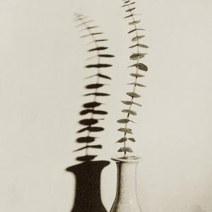 Eucalyptus Leaves in Vase by Graeme Harris