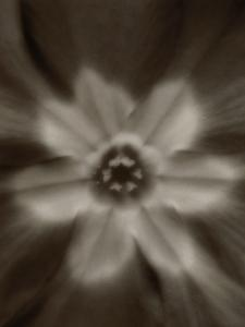 Flower by Graeme Harris