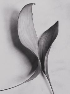 Leaves by Graeme Harris