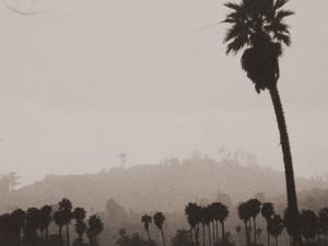 Palms and Hill by Graeme Harris