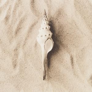 Sea Shell on Sand by Graeme Harris