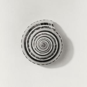 Seashell by Graeme Harris