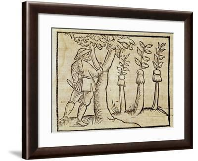 Grafting the Trees from De Agricoltura Vulgare--Framed Giclee Print