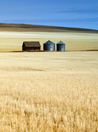 Grain Barn, Rosebud, Alberta, Canada-Walter Bibikow-Photographic Print