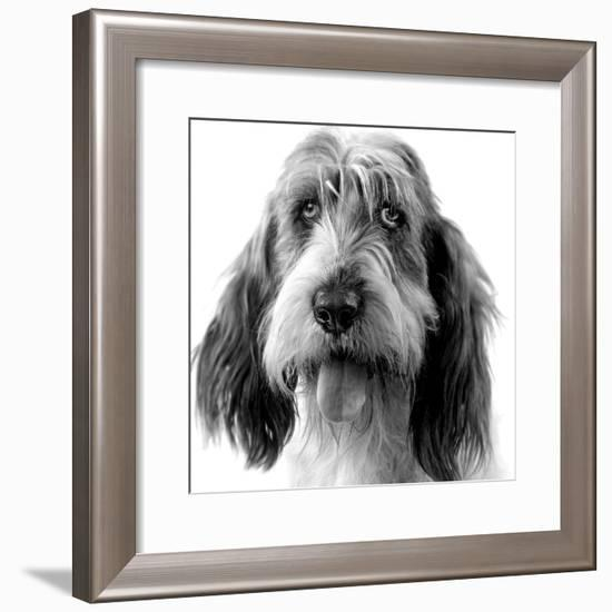 Grand Basset Griffon Vendeen Black and White--Framed Photographic Print