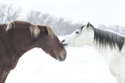 https://imgc.artprintimages.com/img/print/grand-canyon-old-saddle-1_u-l-q1bxsy60.jpg?p=0