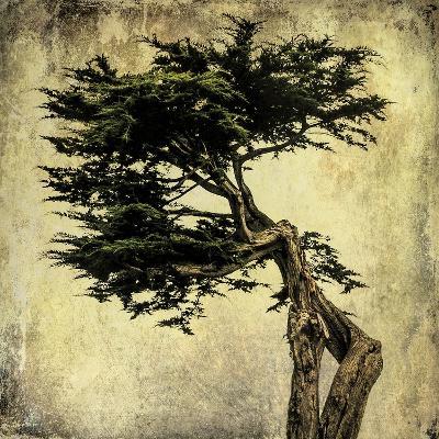 Grand Cypress-Honey Malek-Art Print