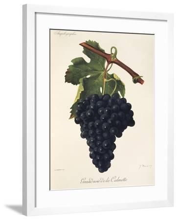 Grand-Noir-De-La-Calmette Grape-J. Troncy-Framed Giclee Print