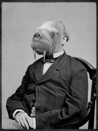 Bjorn Walrussen