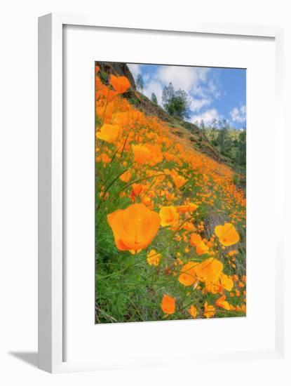 Grand Poppy Landscape Revisited, Merced Canyon-Vincent James-Framed Photographic Print