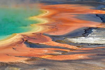 Grand Prismatic Spring Runoff-Photo by Mark Willocks-Photographic Print