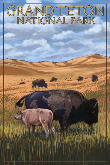 Grand Teton National Park - Buffalo and Calf-Lantern Press-Wall Mural