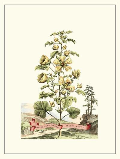 Grandiose View II-Abraham Munting-Art Print