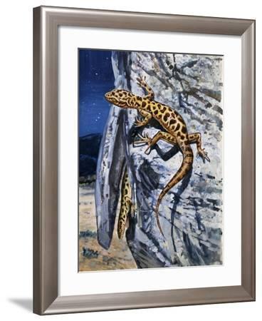 Granite Night Lizard (Xantusia Henshawi), Xantusiidae--Framed Giclee Print