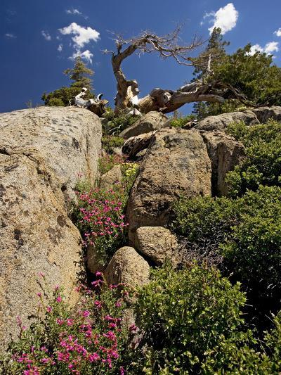 Granite Outcrop-Bob Gibbons-Photographic Print