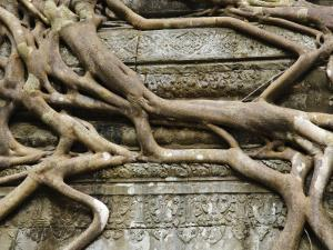Detail of Tree Roots Overgrowing Ruins of Angkor Temple at Beng Mealeay by Grant Dixon