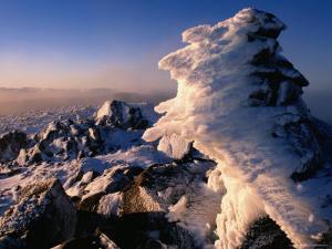 Frozen Rime After Winter Storm in South-West National Park, Tasmania, Australia by Grant Dixon