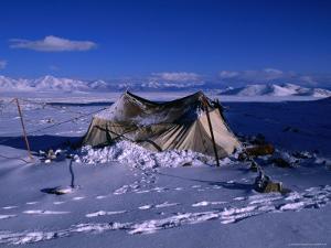 Nomadic Yak Herder's Tent in Snow on Tibetan Plateau, Langtang Himal, Tibet by Grant Dixon