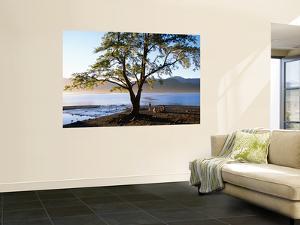 Tree on Playa Catritre, Lago Lacar, San Martin De Los Andes by Grant Dixon