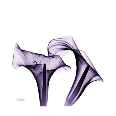 https://imgc.artprintimages.com/img/print/grape-calla-lilies-1_u-l-pyjuhy0.jpg?p=0