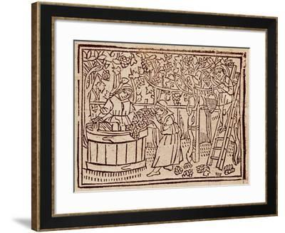 Grape Harvest and Pressing from De Agricultura Vulgare--Framed Giclee Print