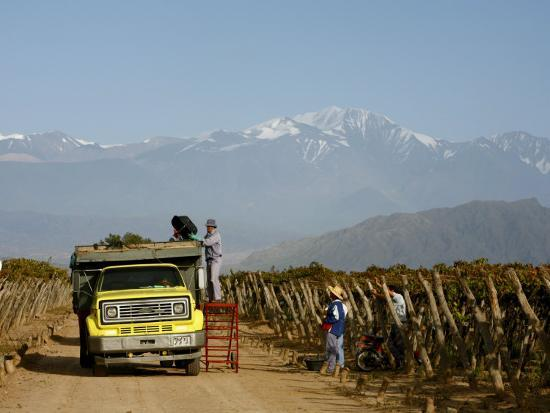 Grape Harvest at a Vineyard in Lujan De Cuyo with the Andes Mountains in the Background, Mendoza-Yadid Levy-Photographic Print