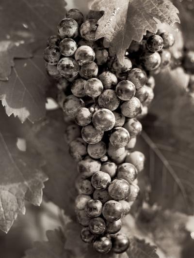 Grapes #23-Alan Blaustein-Photographic Print