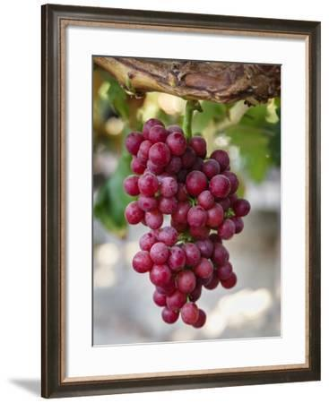 Grapes in San Joaquin Valley, California, United States of America, North America-Yadid Levy-Framed Photographic Print