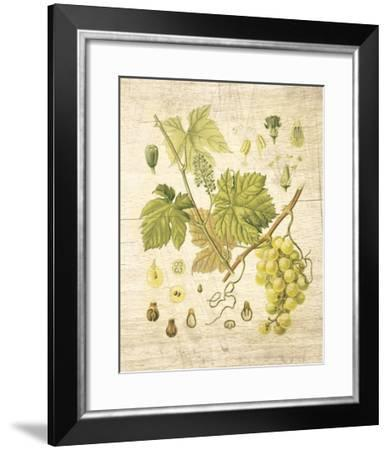 Grapevine II-Nobleworks Inc^-Framed Art Print