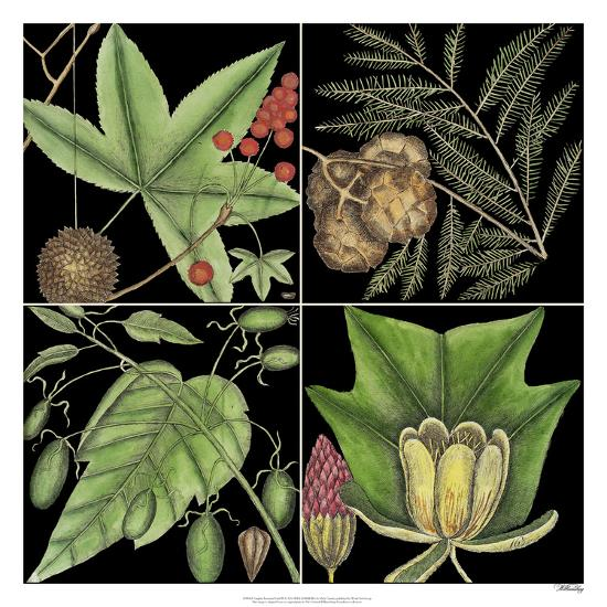 Graphic Botanical Grid III-Mark Catesby-Giclee Print