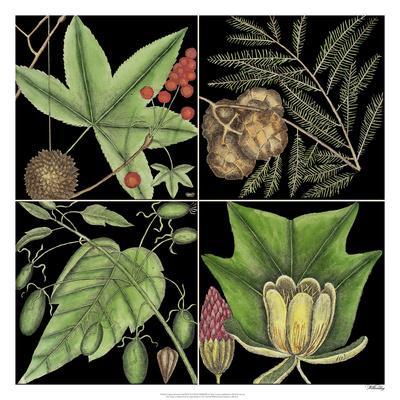 https://imgc.artprintimages.com/img/print/graphic-botanical-grid-iii_u-l-f8u8xn0.jpg?p=0