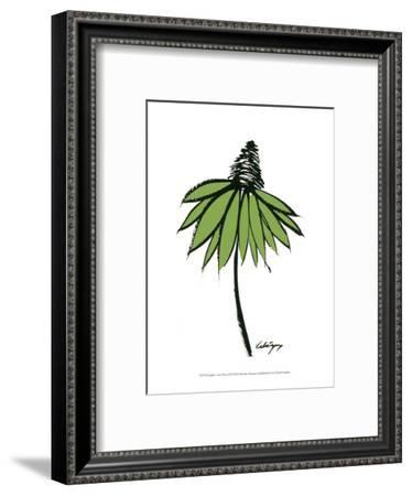 Graphic Cone Flower II-Deborah Velasquez-Framed Art Print