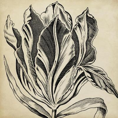 Graphic Floral I-Vision Studio-Art Print