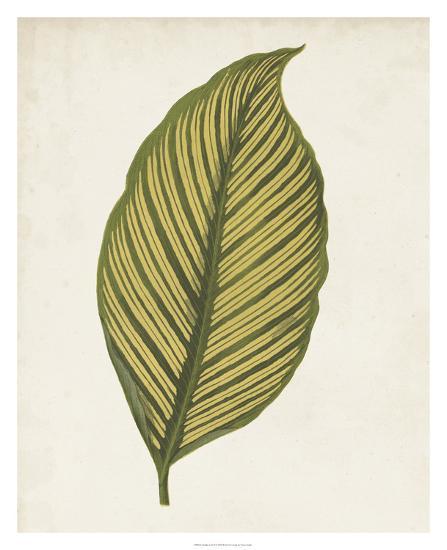 Graphic Leaf II-Vision Studio-Giclee Print