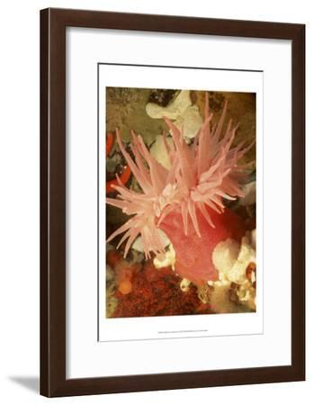 Graphic Sea Anemone I--Framed Art Print