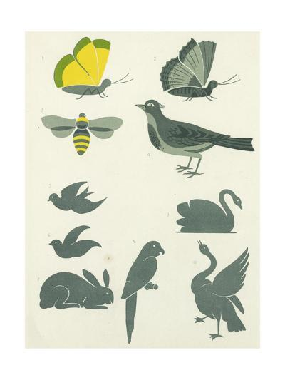 Graphic Winged Insects and Birds--Art Print
