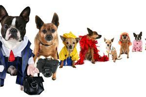A Spoof On Business Images But With Dogs by graphicphoto