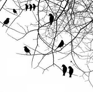 Bird II by GraphINC