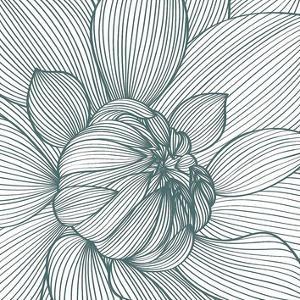 Myrrhis odorata I by GraphINC
