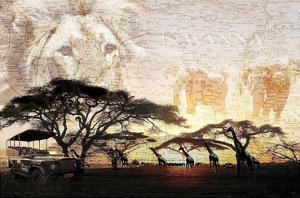 Savanna by GraphINC