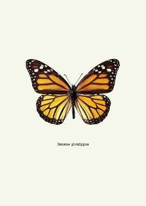 Yellow Butterfly by GraphINC