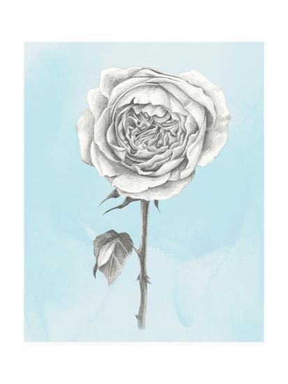Graphite Rose I-Grace Popp-Art Print