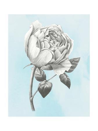 https://imgc.artprintimages.com/img/print/graphite-rose-ii_u-l-q11ahwv0.jpg?p=0