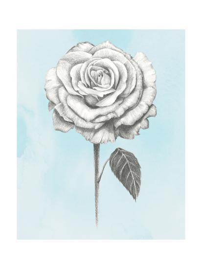 Graphite Rose III-Grace Popp-Art Print
