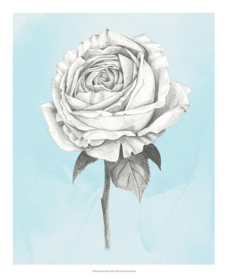 Graphite Rose IV-Grace Popp-Art Print