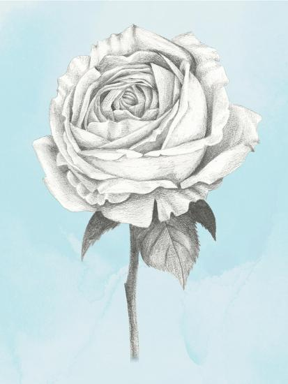Graphite Rose IV-Grace Popp-Art Print